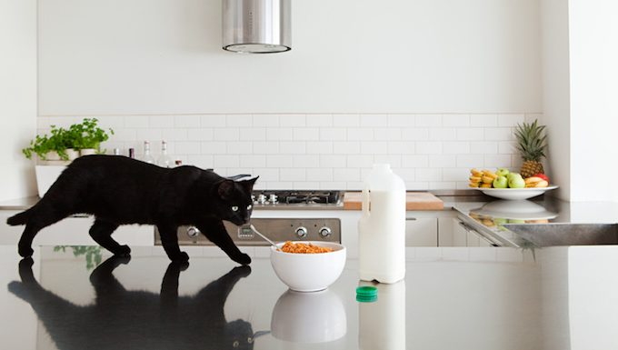 cat walking on counter by cereal
