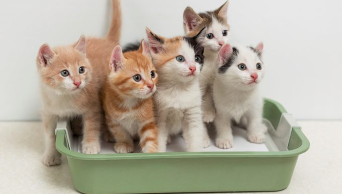 kittens in a litter box