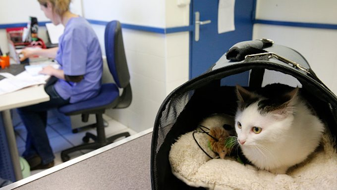 cat in carrier at vets office