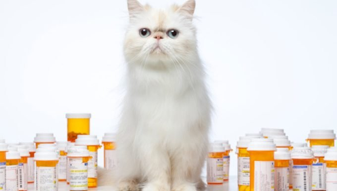 cat sitting in front of pills
