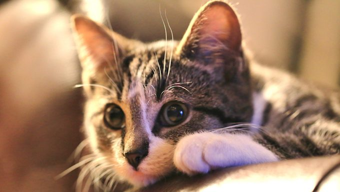 kitten on couch looking shy