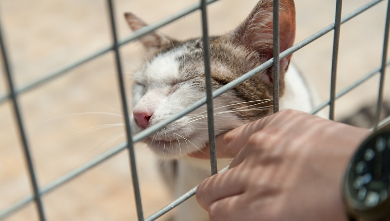 A series of very loving cats awaiting adoption at animal shelters in Singapore. Do take a look at my portfolio, there are animal shelter photos of dogs as well