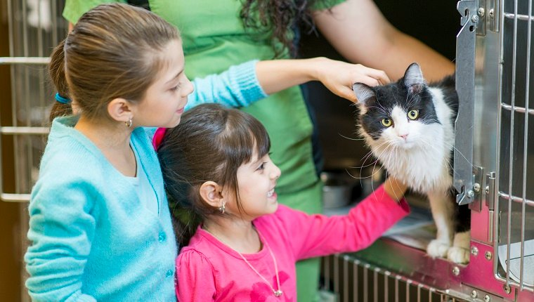 Kids picking a cat to adopt from the animal shelter.