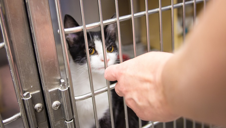 A kitten inside a cage in the animal shelter.