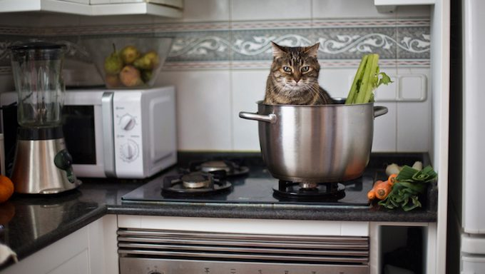 cat in pot on kitchen stove
