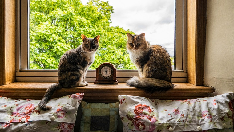 Cats On Window Sill At Home