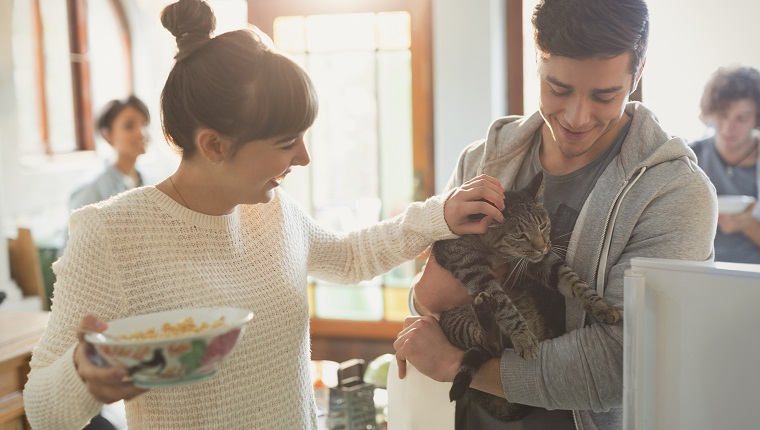 Young couple petting cat in kitchen