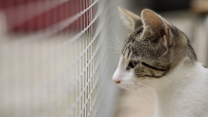 cat in a shelter