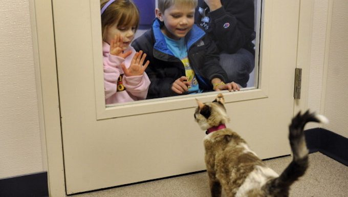 cat with collar looking at kids