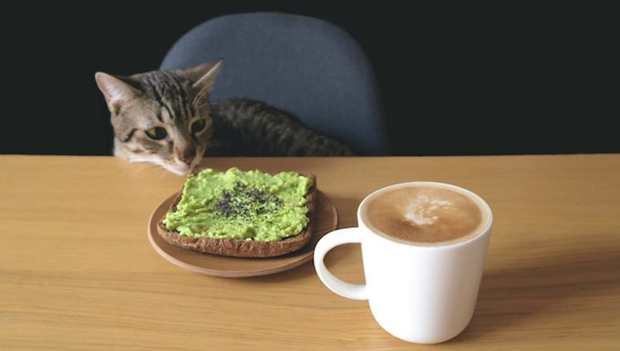 cat with breakfast