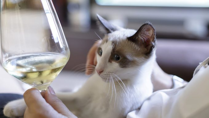 cat with wine
