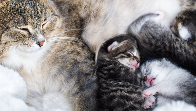 Mother cat feeding her newborn babies on Mother's Day.