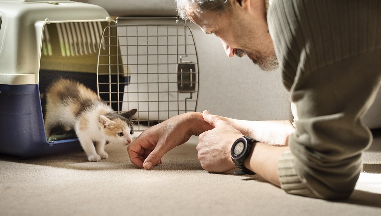 Adopted kitten taking his first steps out of a pet carrier to his new family and home