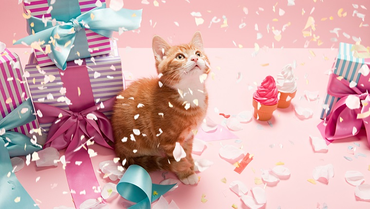 How To Throw The Best Cat Party Ever! - CatTime
