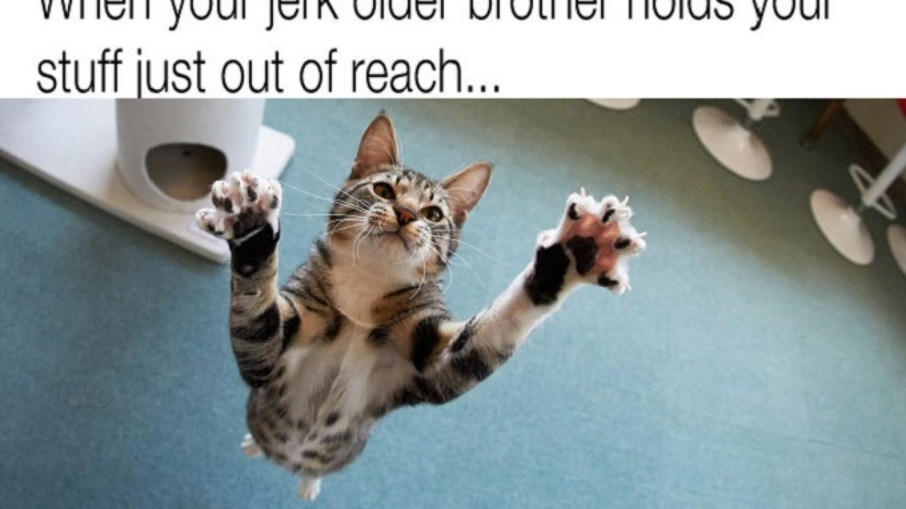 45 More Hilarious Cat Memes To Make Your Day Better Cattime