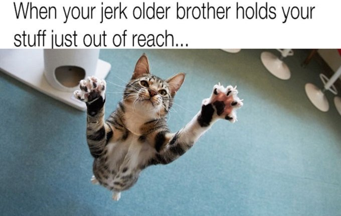 """cat jumping with claws out, text reads """"when your jerk older brother holds your stuff just out of reach"""""""