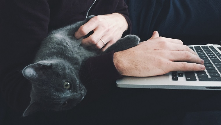 Close-Up Of Cat Lying On Man Working On Laptop