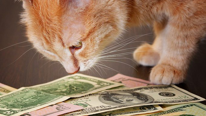 cat sniffing money
