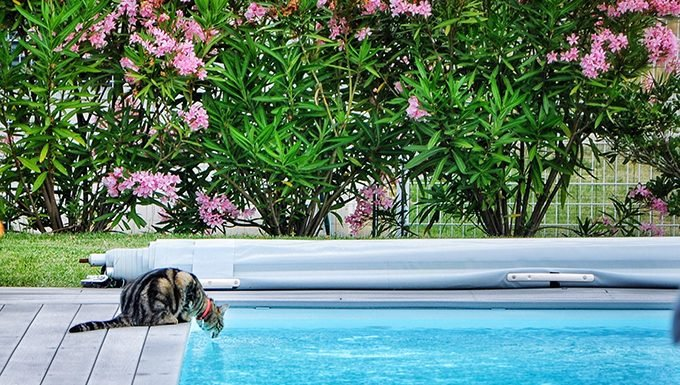 cat drinking from pool