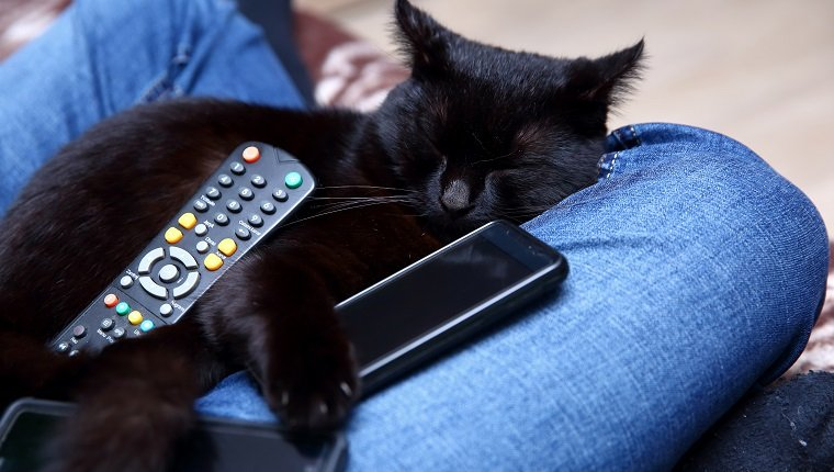 cats with addiction to technology will be treated in specialist clinics in the future.