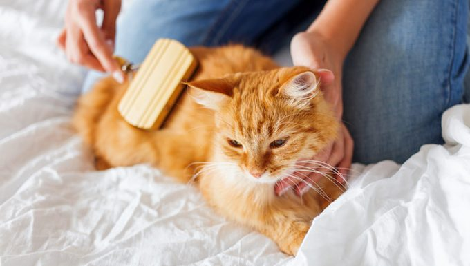 cat getting groomed