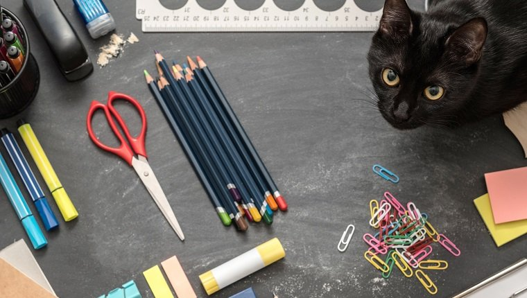 Creative study environment. Top view of back to school essentials and black cat on chalkboard desk.