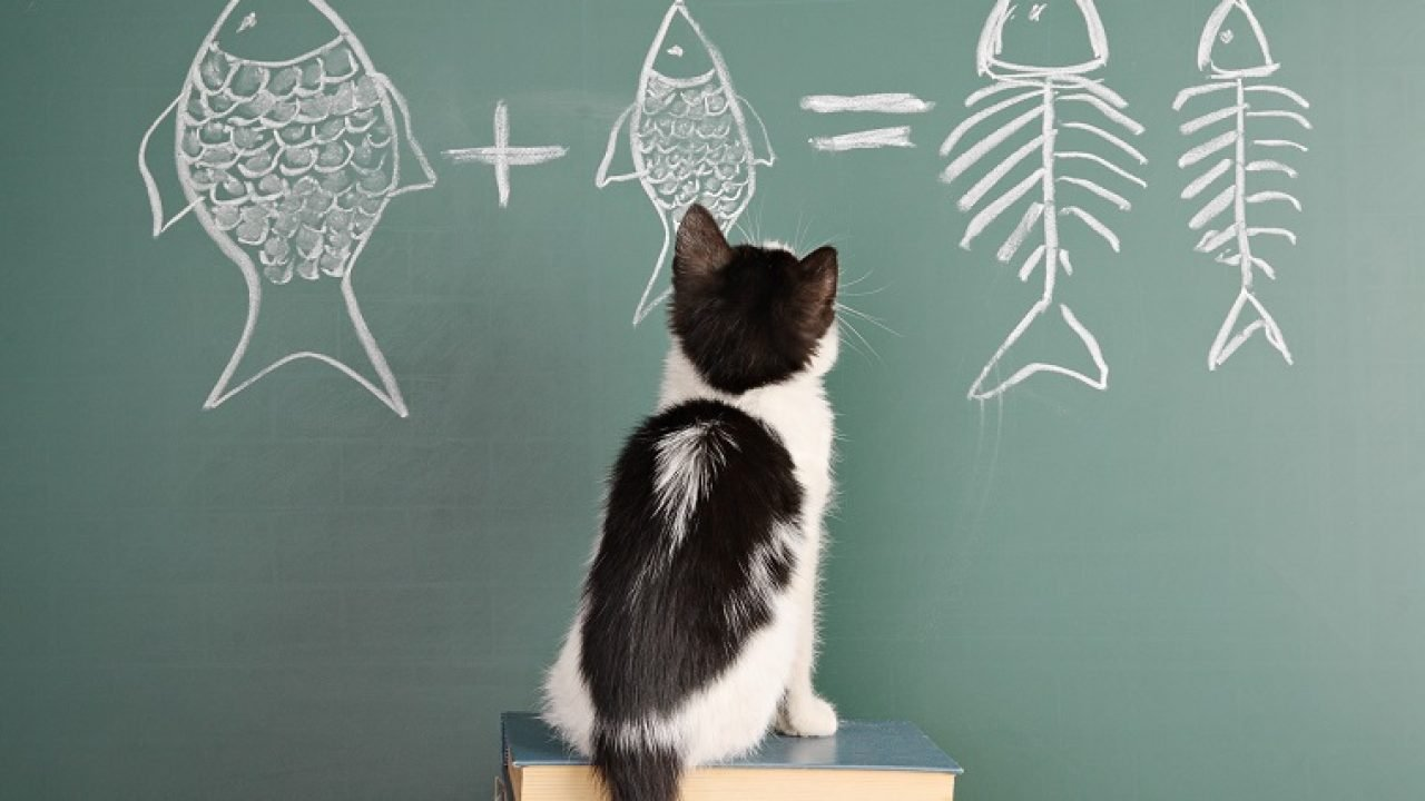 4 Ways To Get Into 'Back To School' Mode With Your Cat - CatTime