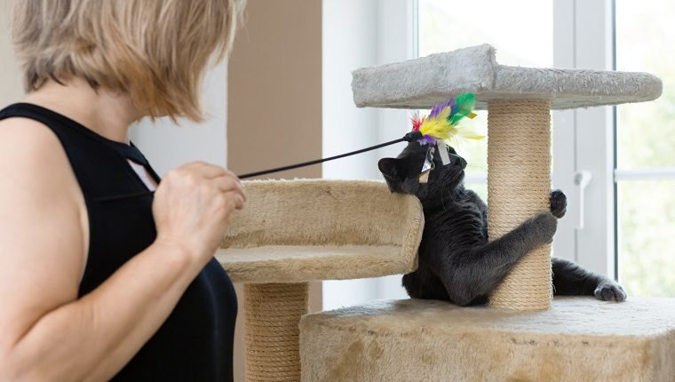 woman holds pet toy, plays with young gray cat
