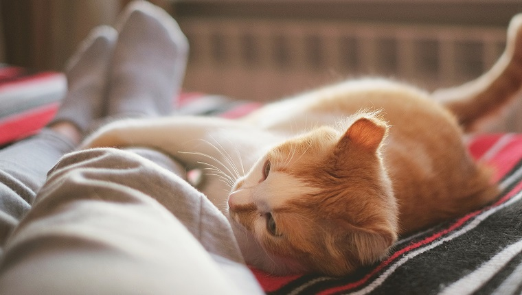 lying and relaxing in bed with cat opposite the window on a sunny day