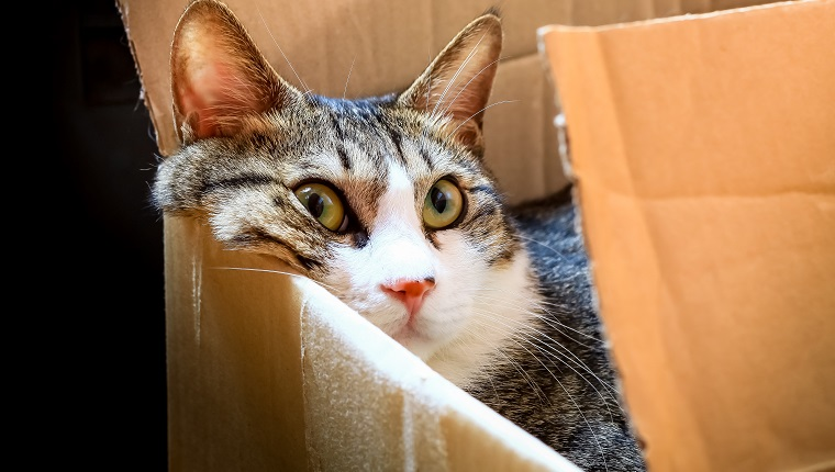 This super cute Korean cat is a huge box lover just like all cats :)