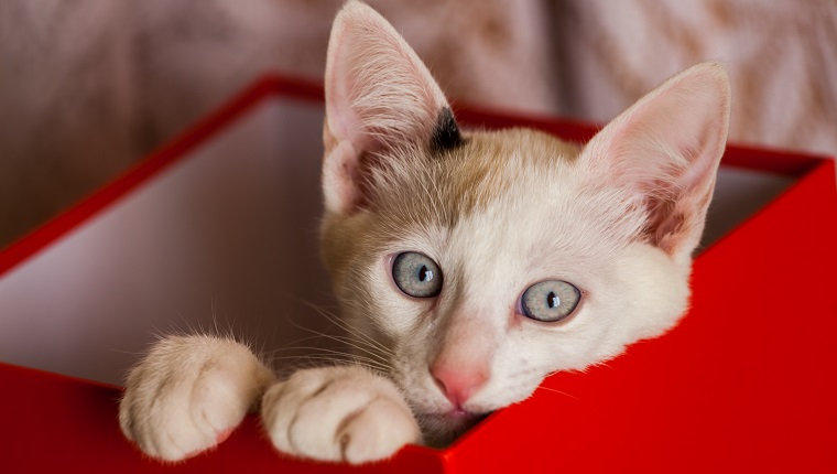 Small cat inside red box