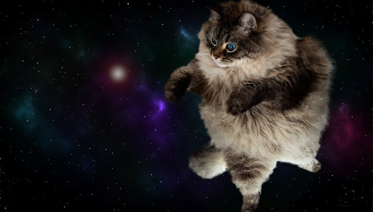 funny fluffy cat in space with galaxy background