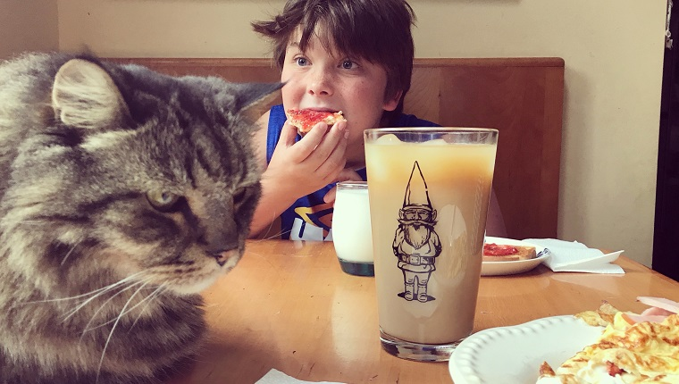 Portrait of a little boy with freckles making a silly face as he eats his breakfast at the kitchen table. Large Maine Coon sits in the foreground. Childhood. Discovery and adventure.