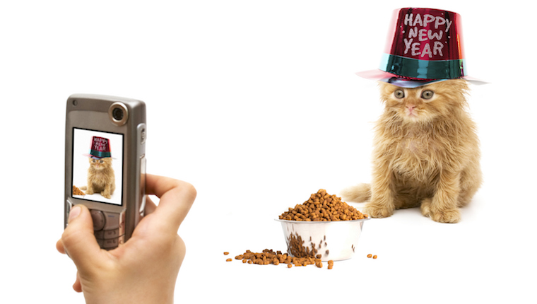 Cat celebrating the new year
