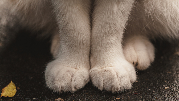 Close up of cat's front paws