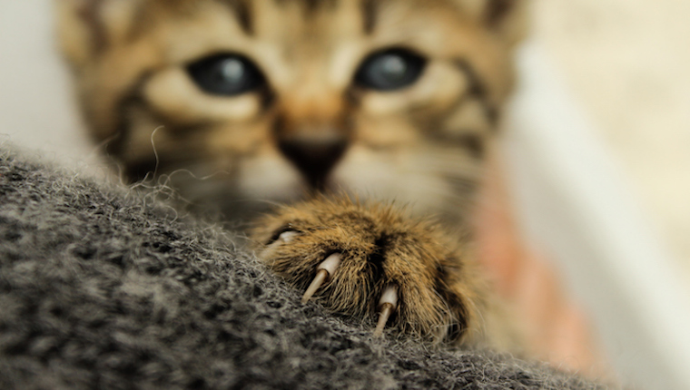 Close up of cat's claws