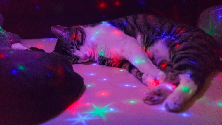A cat sleeping on the couch with a toy lamp illuminating star shapes from above. Grainy image.