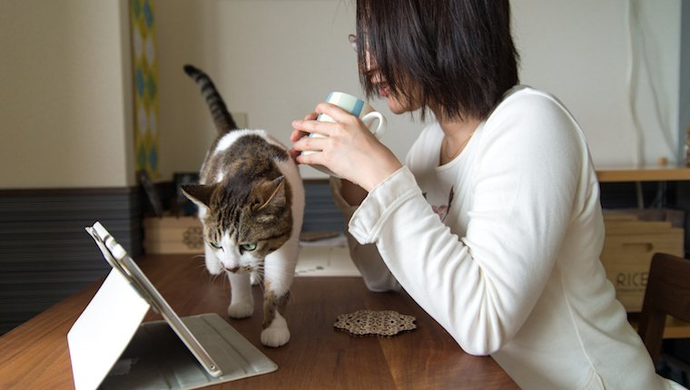 Cat and owner watching iPad