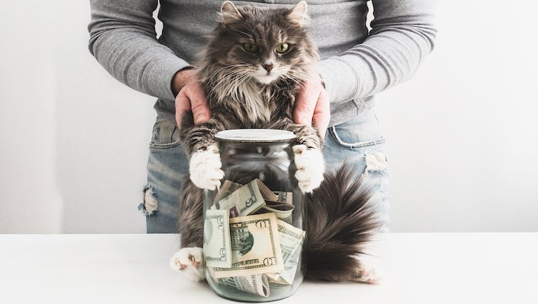 Cat with jar of cash on laugh and get rich day