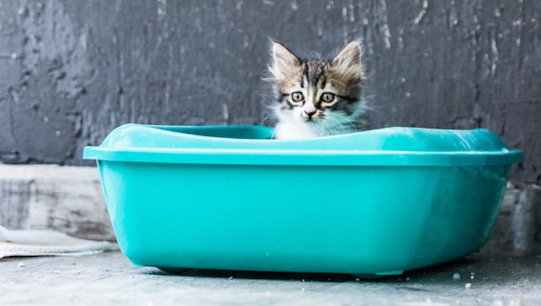 Kitten in litter box