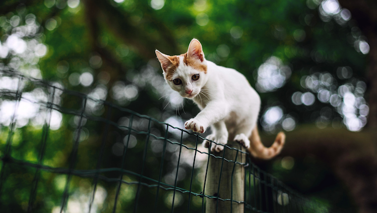 Cat on fence on pet theft prevention day. Outdoor cats are more at risk of theft.