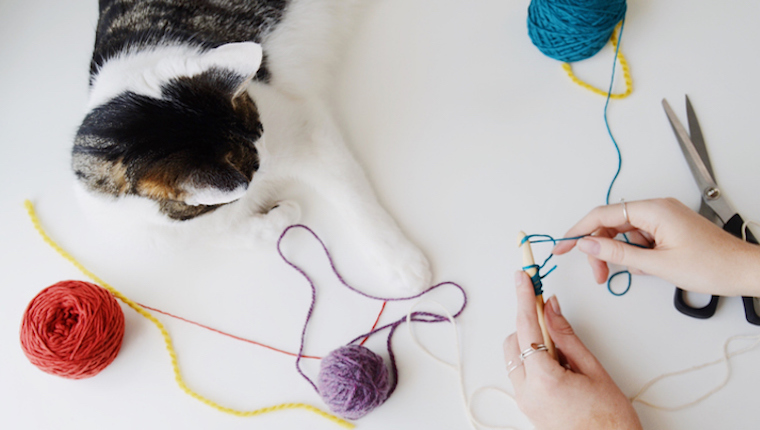 Cat and human crocheting