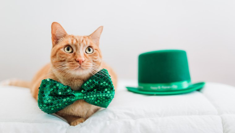 Cat with green bowtie for saint patrick's day