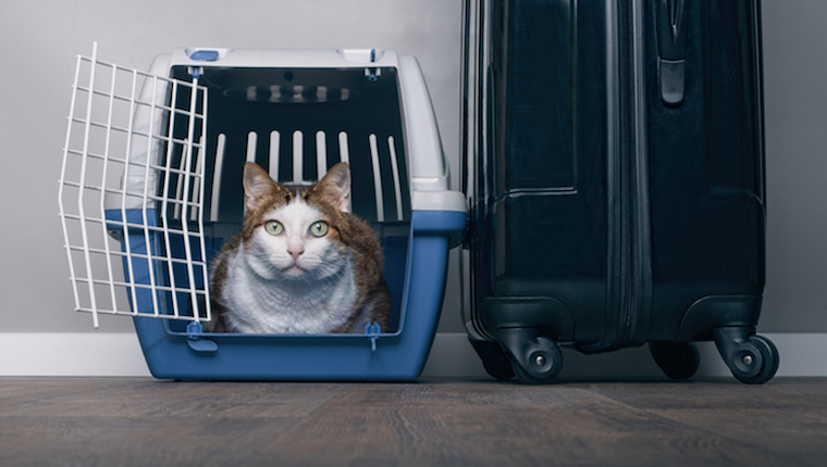 Cat in carrier
