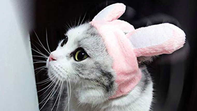 Cat rabbit ears hat