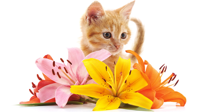 Kitten and lilies