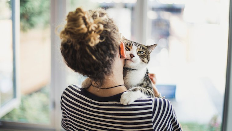 Human holding cat