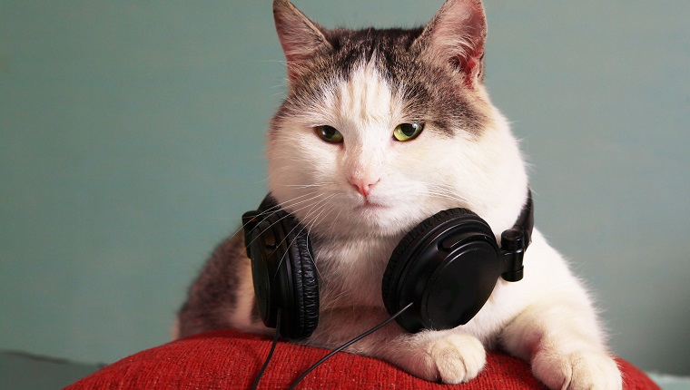 funny picture of cat with notebook and headphones