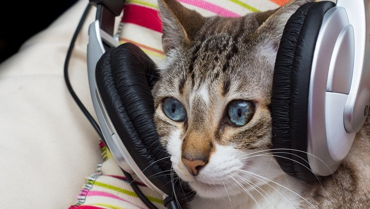 cute cat with headphones on its head
