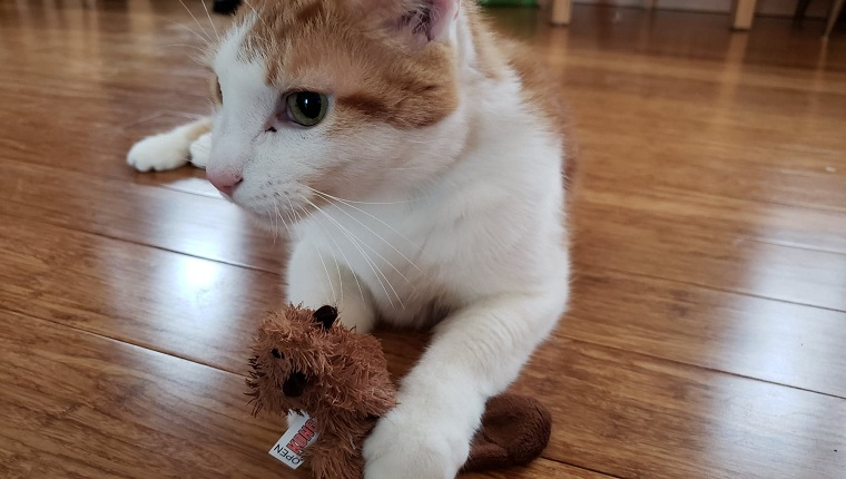 rex the cat plays with catnip toy